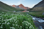 Mountain willow-herb, the middle Blue Lake and Peak 13,242 at sunrise, Mt. Sneffels Wilderness, Colorado