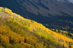 Aspen grove below Mt. Sneffels, San Juan Mountains, Colorado