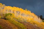 Storm clouds and sunlit aspen grove near Mt. Sneffels, San Juan Mountains, Colorado