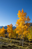 Aspen near Silver Jack Reservoir, San Juan Mountains, Colorado