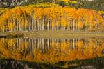 Aspen reflected in Clear Lake, near Silver Jack Reservoir, San Juan Mountains, Colorado
