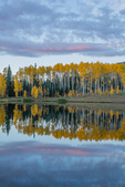 Aspen reflected in Rowdy Lake, San Juan Mountains, Colorado