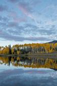 Aspen reflected in Rowdy Lake, San Juan Mountains, Colorado