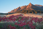 Sumac and the Flatirons at sunrise, Boulder Mountain Parks, near Boulder, Colorado