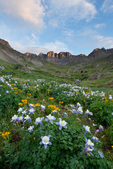 Columbine in American Basin at sunset, Handies Peak Wilderness Study Area, Colorado