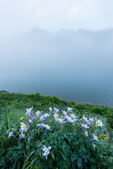 Columbine and fog over Clear Lake, San Juan National Forest, Colorado