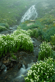 Mountain willow-herb and a waterfall along Clear Creek, San Juan National Forest, Colorado