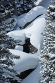 Snow-covered boulders and trees along the Emerald Lake Trail after a spring snow, Rocky Mountain National Park, Colorado