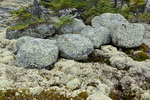 Reindeer moss and lichen-covered boulders along the Prelude Lake Nature Trail, Prelude Lake Territorial Park, along the Ingraham Trail near Yellowknife, Northwest Territory, Canada