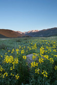 Golden banner in Moraine Park at sunrise, Rocky Mountain National Park, Colorado