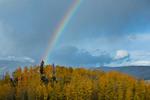 Rainbow over aspen grove near the Telluride Mountain Village, San Juan Mountains, Colorado