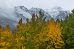 Aspen near Silver Jack Reservoir and Peak 12,734, San Juan Mountains, Colorado