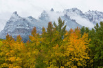 Aspen and snowy crags near Silver Jack Reservoir, San Juan Mountains, Colorado