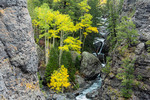 Aspen in gorge along Bear Creek, San Juan Mountains, Uncompahgre National Forest, Colorado