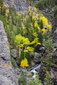 Aspen in gorge along Bear Creek, San Juan Mountains, Uncompahgre National Forest, Colorado