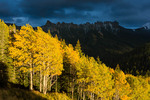 A shaft of sunshine spotlights a grove of aspen on Cimarron Ridge, San Juan Mountains, Uncompahgre National Forest, Colorado