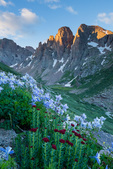Columbine, kings crown, and the Turret Needles from Ruby Basin at sunrise, Weminuche Wilderness, Colorado