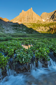 Marsh marigolds, Jagged Mountain, and Gray Needle at sunset, Weminuche Wilderness, Colorado