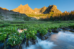 Marsh marigolds, Jagged Mountain, Gray Needle, and Peak Ten at sunset, Weminuche Wilderness, Colorado