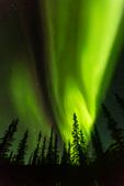 Aurora over black spruce and the Brooks Range, near Wiseman, Alaska