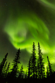 Aurora over black spruce and the Brooks Range, near Wiseman, Alaska