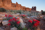 Indian paintbrush and the Three Gossips at sunrise, Arches National Park, Utah