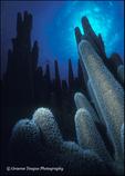 Pillar Coral Skyline