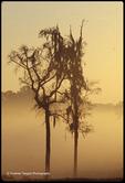 Mist Weave