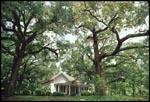 House & Oaks