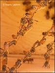 Live Bee Chain