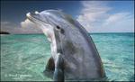 Dolphin Spyhop