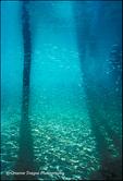 Cayos Dock