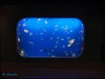 Moon Jelly Tank