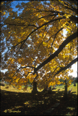 Country Cemetery in Autumn Yellow