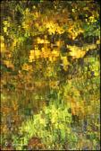 Pond Palette 02