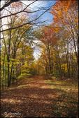 Fall Road 02(v)
