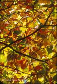 Fall Colours 02(v)