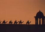 Camels on the Ramparts