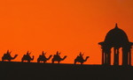 Camels on the Ramparts, Delhi, India