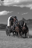 Late 1800's original calvary wagon and running horses near Dubois, Wyoming.