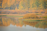 Fall colors along the Oxbow Bend of the Snake River in Grand Teton Natioanal Park, Wyoming.