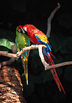 Friendly macaws, San Diego Zoo, San Diego, California