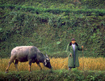 Man with his water buffalo, Sichuan Province, China