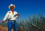 Ismael, a jimador for Jose Cuervo, with blue agave plants, outside the town of Tequila, Jalisco, Mexico
