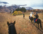 A morning ranch ride with Moonlight Stables, outside Arrowtown, South Island, New Zealand