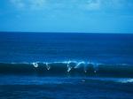 surfing the big waves, Waimea Bay, North Shore, Oahu, Hawaii