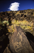 Petroglyph of a macaw, Petroglyph National Monument