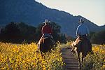 Riding in late summer, Granite Mountain Wilderness, Prescott, Arizona