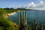 Cactus above Playa Kalki, viewed from Lodge Kura Hulanda and Beach Club, West End, Curacao