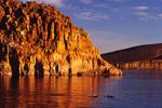 dolphins swim at sunrise by Isla Gallina, off Isla Espiritu Santo, Baja California Sur, Mexico